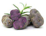 Elbers Hof Blauer Schwede Kartoffeln