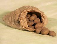 Elbers Hof Kartoffel